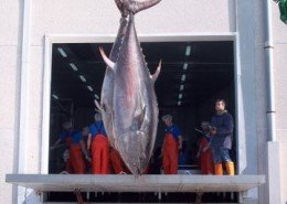 Tuna Factory