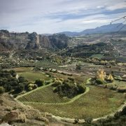 Vineyards of Ronda