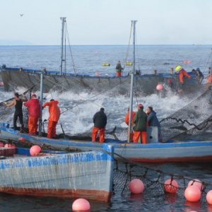 almadraba tuna fishermen spain