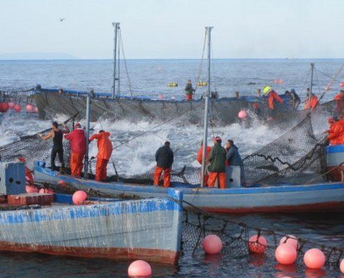 almadraba fishermen vejer