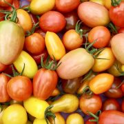 Tasty Tomatoes at Clisol, Almeria