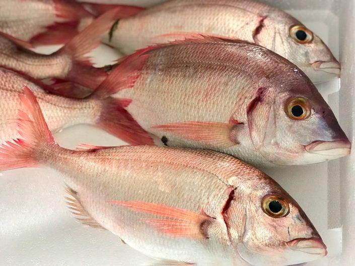 Cadiz Fish